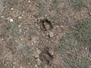 Animal Tracks Estes Park