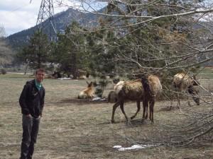 Will Elk