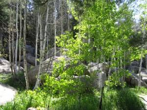 Aspen Grove Castlewood