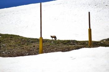 Breck_Peak8_small_2014_074