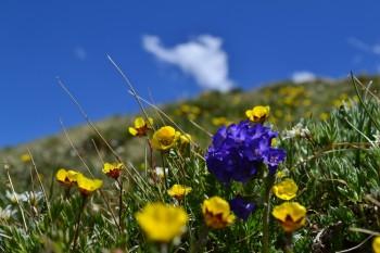 Breck_Peak8_small_2014_156