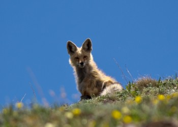 Breck_Peak8_small_2014_190