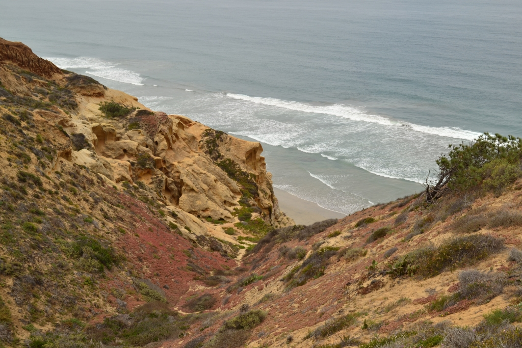 Torrey_Pines_Small_011