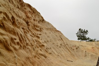 Torrey_Pines_Small_026