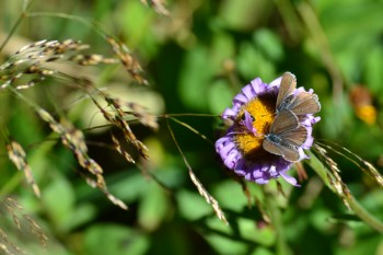 Flora_Small_332